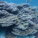 coral koh phi phi dive sites