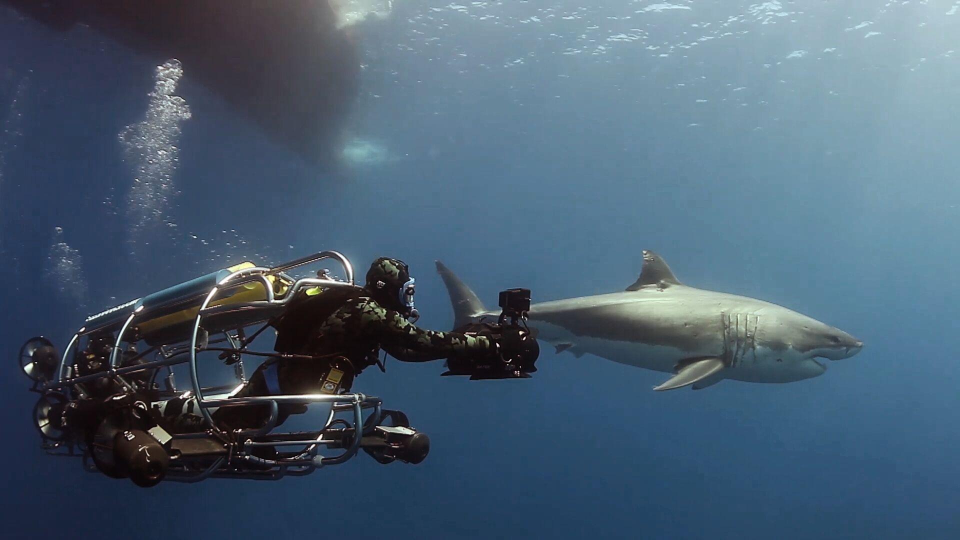 Socorro Vortex Liveaboard Bluewater Dive Travel