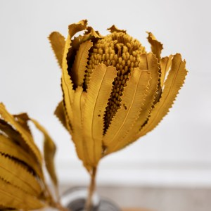 protea senf