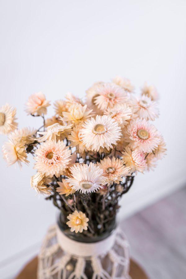 Strohblumen