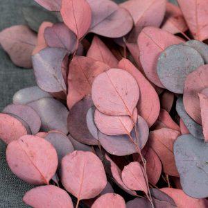 eukalyptus trocken