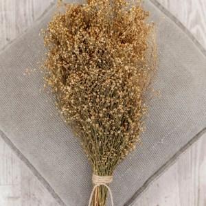 Trockenblumen Broom Bloom