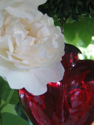 blume_nah_2 Blumen Hoenekop Herbern