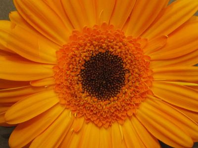 blume_orange Blumen Hoenekop Herbern