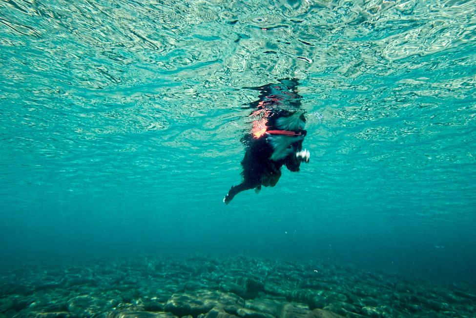 Big Swimming Dog