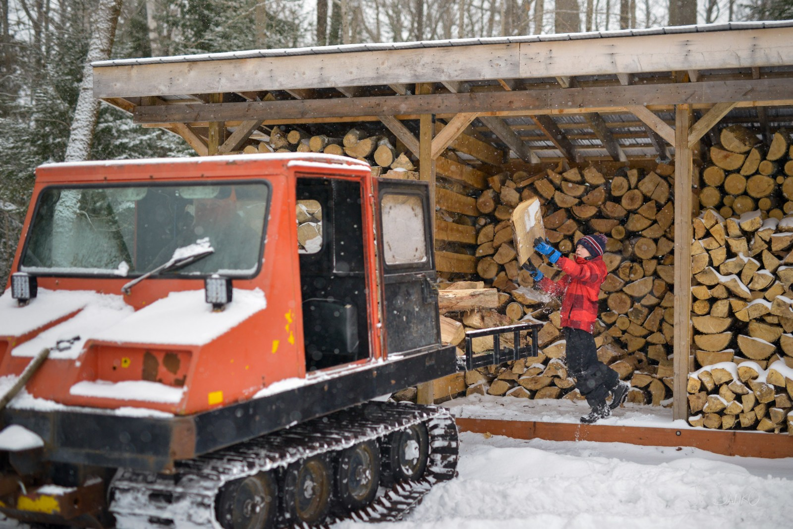 Boy in red winter jacket tosses firewood from wood shed onto bed of snow groomer machine