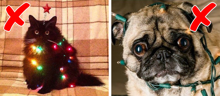 5 Worst Holiday Dangers That The Pet Owner Should Set To Be Aware Of Them 1