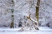 Jim-Stupples-Forest-Den