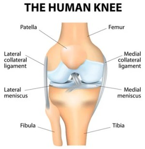 Knee Replacement Surgery | Boston Medical Center