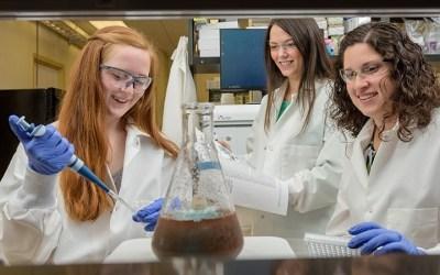Shining a Light on Gene Regulation
