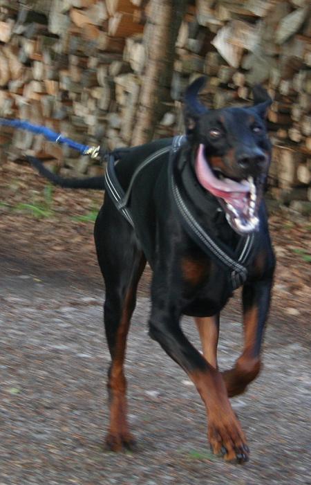 Aramis Running DOBe