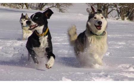 Kody im Schnee