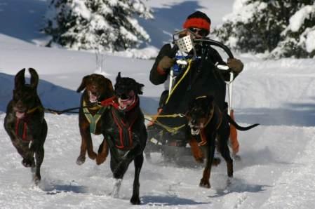 Hundeschlittenrennen in Lenzerheide