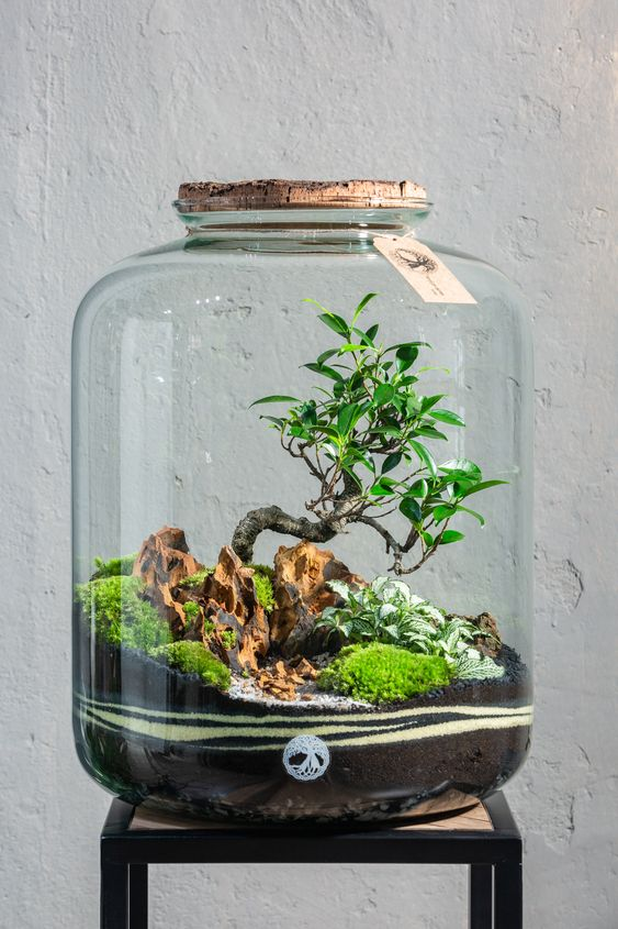 Terrario: un microcosmo in barattolo