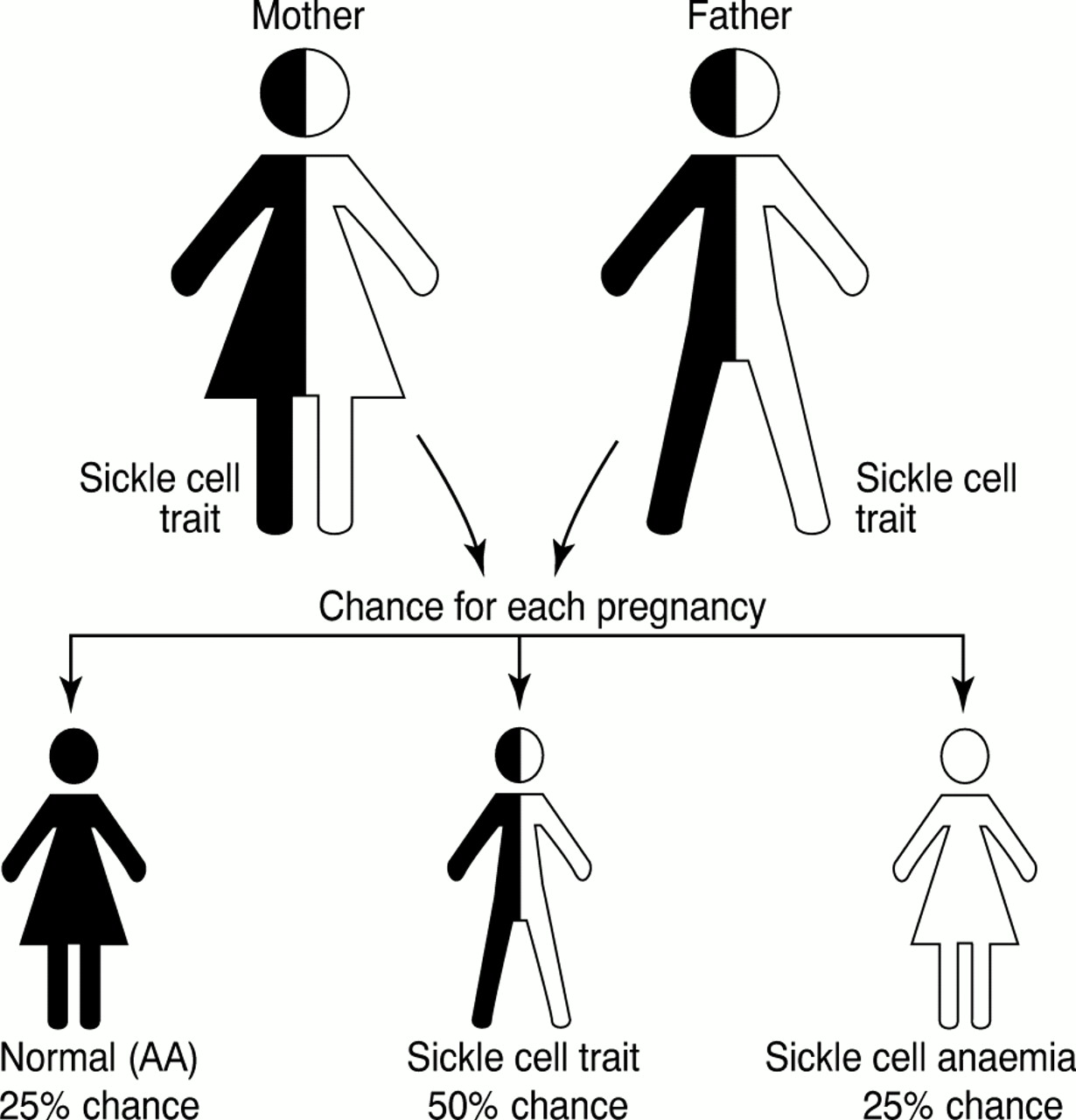 Dwarfism As Related To Sickle Cell Anemia