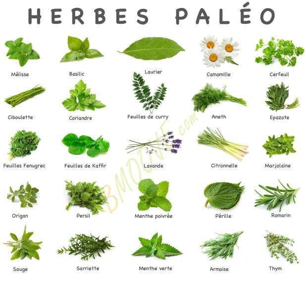RÉGIME PALÉO : Guide De Démarrage COMPLET (Origine / Aliments / Recettes...) 4