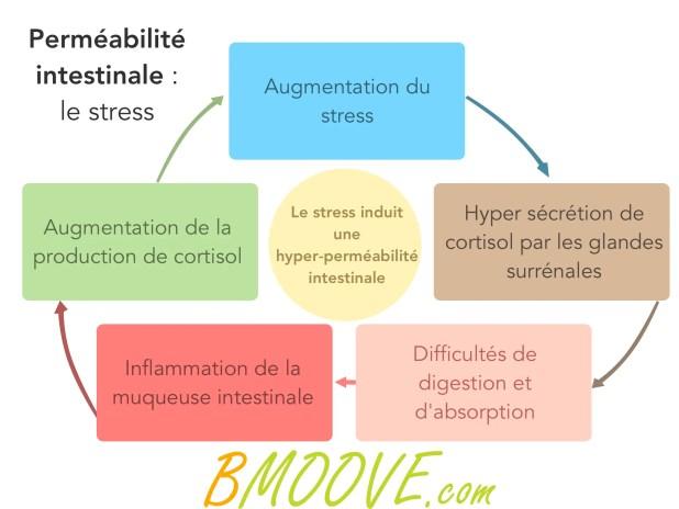 Perméabilité intestinale et hyperperméabilité intestinale 11