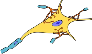 OMÉGA-3 : les bienfaits SANTÉ analysés par la SCIENCE 3