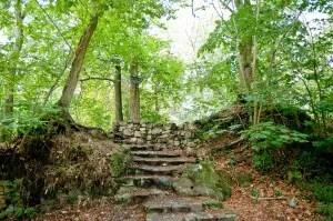 Stage MovNat en forêt de Fontainebleau !