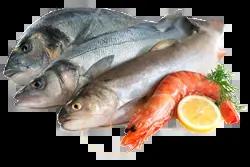 poisson paléo
