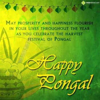 Download happy maattu pongal whatsapp video wishes greetings 2015 happy mattu pongal images 2 m4hsunfo Gallery