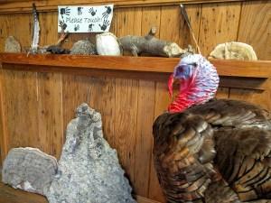 Balsam Mountain Trust Nature Center