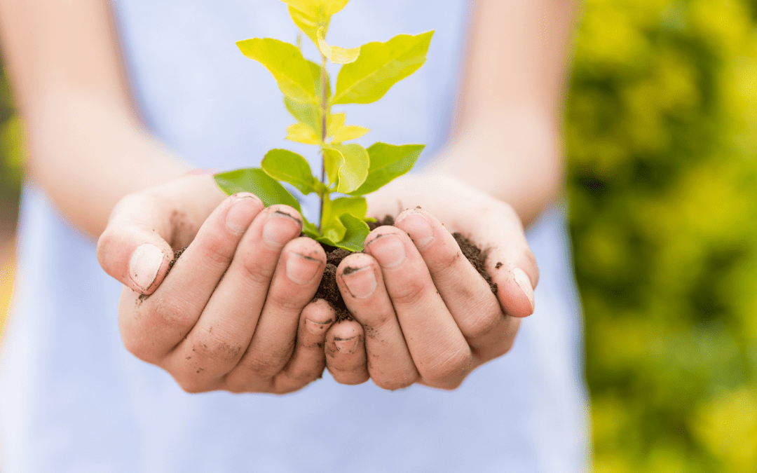 Are sustainable and ethical investments the way of the future?