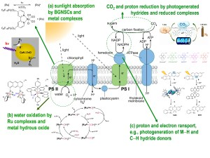 BNL | Chemistry | Artificial Photosynthesis Group