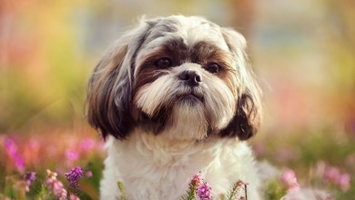 9 Of The Best Family Friendly Dog Breeds