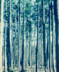 trees-ii