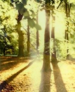 trees-iv