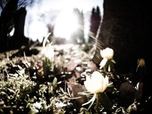 Spring Flowers in Blom