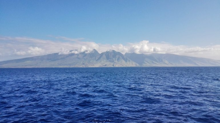 Favorite Maui Things, Whale Watching