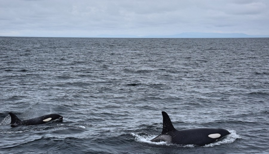 Whale Watching in Iceland with Láki Tours