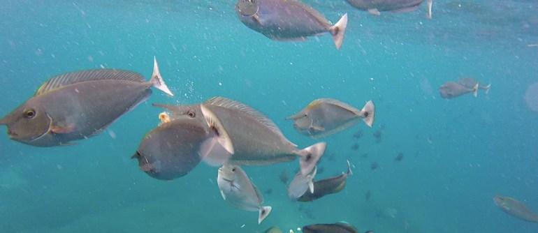 snorkel nusa lembongan