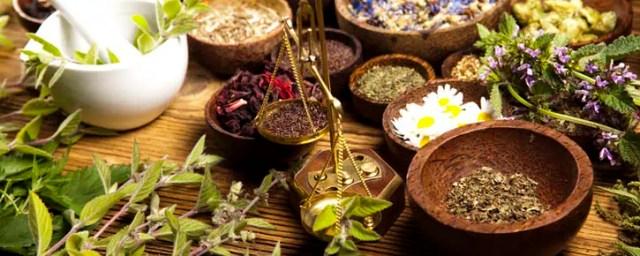 plantas_medicinais_capa
