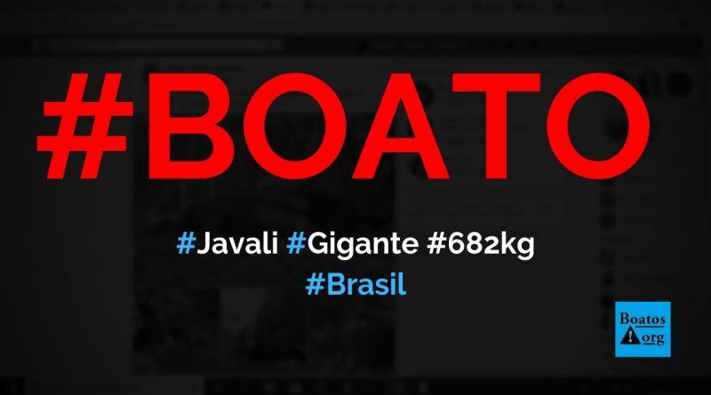 Javali gigante de 682 kg é caçado em Lages, Santa Catarina, diz boato (Foto: Reprodução/Facebook)