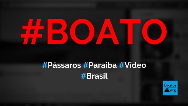 Vídeo mostrou pássaros dançando nos céus de Belém Brejo da Cruz, na Paraíba (Brasil), diz boato (Foto: Reprodução/Facebook)