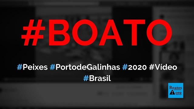 Toneladas de peixes foram pescadas em Porto de Galinhas em 2020 e pescadores deram de graça para a população, diz boato (Foto: Reprodução/Facebook)