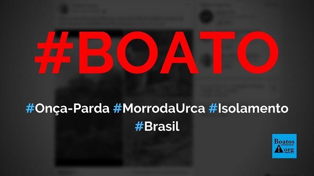 Onça-parda é encontrada no Morro da Urca (Rio de Janeiro) após isolamento social, diz boato (Foto: Reprodução/Facebook)