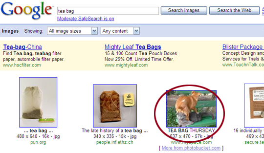 tea_bag_fail_catdog.jpg