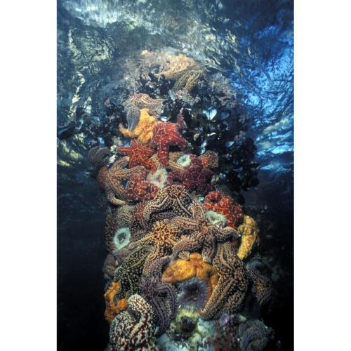 Marine Megatropolis - Inter-tidal zone community, Platform Hondo, 5 feet