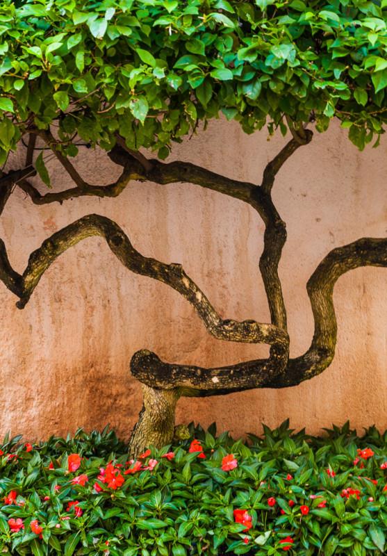 10211. Curving tree trunk, Florida