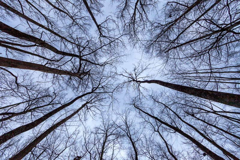 Trees against the sky, Lorance Creek Natural Area, Arkansas