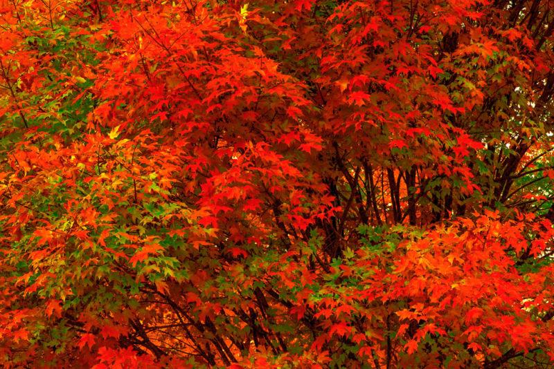 10595 Autumn foliage, Arkansas
