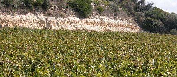 vigne01