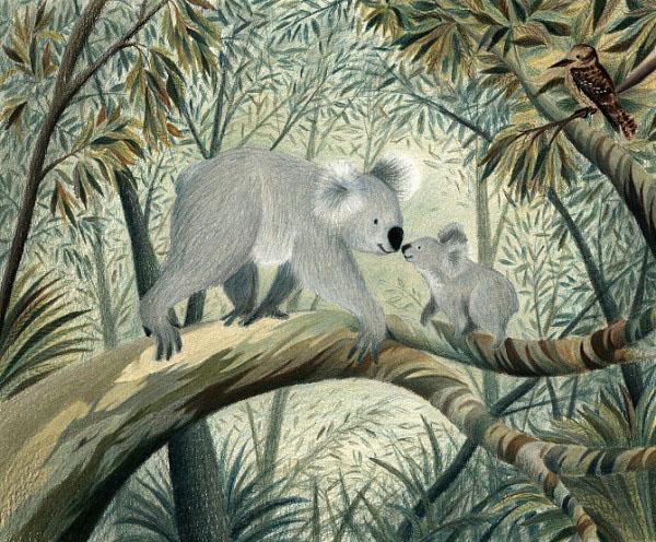 Koalas.Jweb