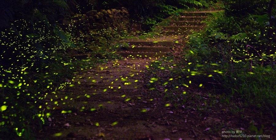 【新北市|螢火蟲拍攝地點】瑞芳。超美螢火蟲祕境 x 賞螢注意事項 x 螢火蟲拍攝心得