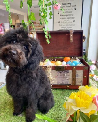 Happy Easter 🐣  Love us all at Bob The Dog 💛🐾