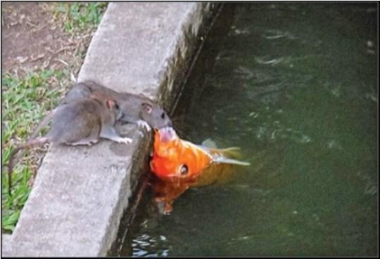 Ratos infestam Fórum Criminal de Curitiba